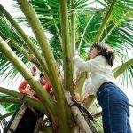 Mật Hoa Dừa Sokfarm – Miền Trái Cây Trở Ngọt VTV1