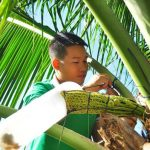 mật hoa dừa sokfarm